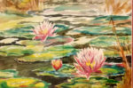 Lyn Rodger Waterlilies